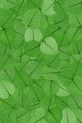 Green skeletal leaves - background - collage