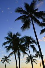 Vertical Vacation Image Of Tropical Palm Trees At Sunset