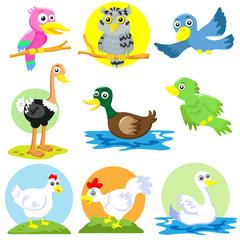 bird and  poultry cartoon set