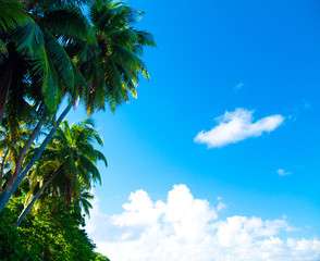 Horizon Dream Maldives