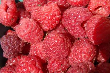 fresh organic raspberries at farmers market
