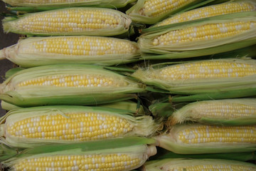 Fresh corn on the cob  at farmers market