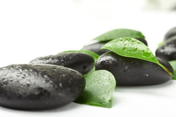 black stones and green leaves