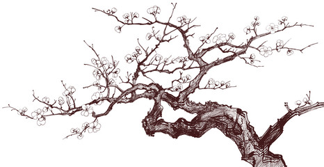 Photo sur Aluminium Art Studio Cherry Tree