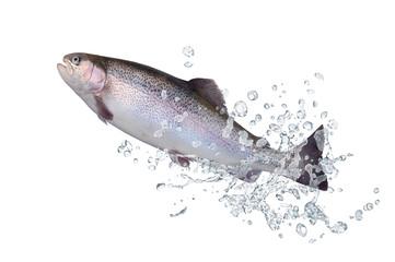 Fische 126