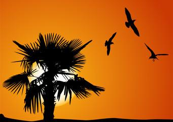 palm tree and gulls at sunset