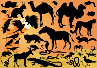 set of desert animals illustration