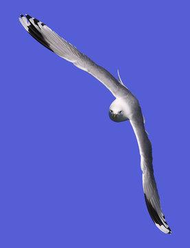 Gull Look In My Eyes