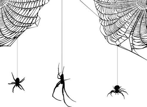 three spiders in web illustration