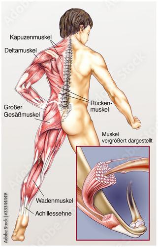 Menschlicher Körper mit allen Muskeln\