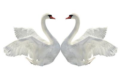 Tuinposter Zwaan Two swans.