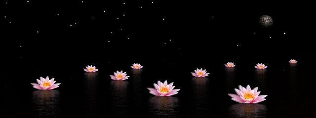 Garden Poster Lotus flower Lily flowers by night