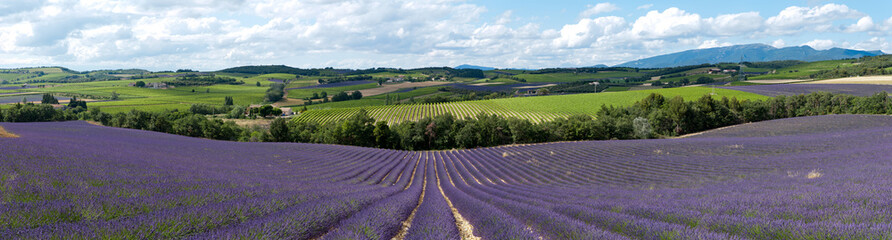 Spoed Fotobehang Lavendel champ de lavande - Provence