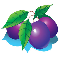 Plums with green leaves. Vector illustration.