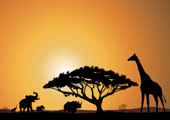 savane afrique
