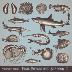 fish, shells and seafood (set 2) - various vintage illustrations