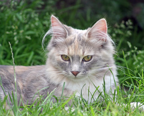beautiful kitten in the garden