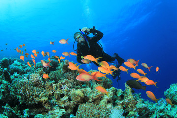 Tropical Fish, Coral Reef and Scuba Diver