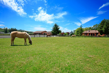 Pasture on A horse ranch with a house and fence. Wall mural