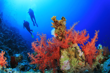 Scuba Divers in clear blue seas over beautiful Coral Reef