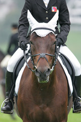 horse dressage 2