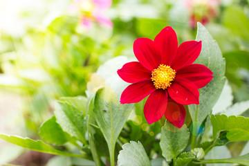 Single beautiful flower outdoor