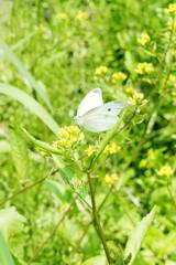 自然と花と蝶々