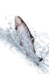 Fische 122