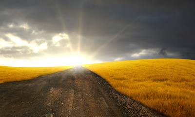 Road on grain field