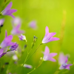 Purple flowers close-up