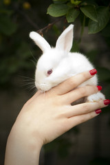 little rabbit in a female hand