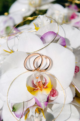 Orchid and Wedding Rings