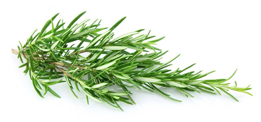 Fresh rosemary closeup