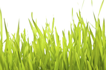 Grass with water drops in morning