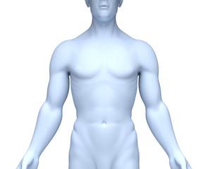 Männlicher Oberkörper