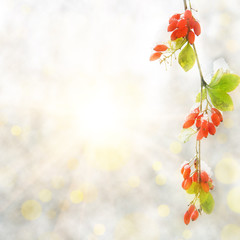 branch red berry with leaf autumn