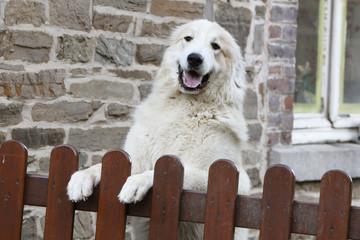 chien à la porte d'entrée
