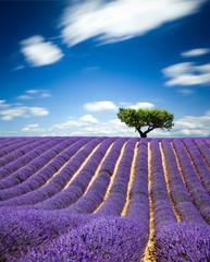 Printed roller blinds Lavender Lavande Provence France / lavender field in Provence, France