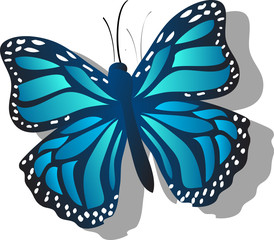 Blue Butterfly with Shadow