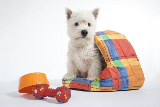 jeune chien dans sa niche en tissu