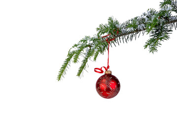 isloated red Christmas ornament hanging from a pine branch
