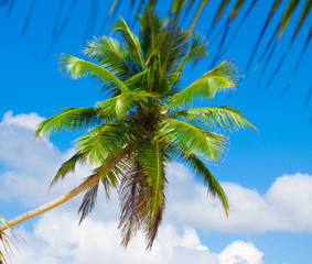 Garden Foliage Palms