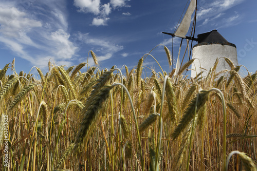 Epis de bl et moulin au vent photo libre de droits sur la banque d 39 images image - Image epis de ble ...