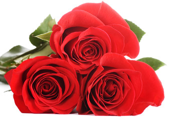 The beautiful red rose isolated
