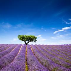 Spoed Fotobehang Lavendel Lavande Provence France / lavender field in Provence, France
