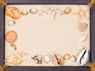 Shells on sand in frame