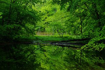 沼に映る新緑