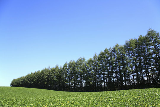防風林と畑