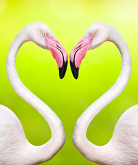couple of flamingos make a heart shape