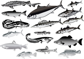 seventeen grey fishes isolated on white